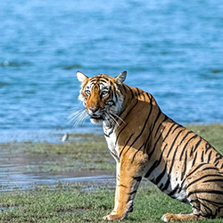 Corbett Adventure Package